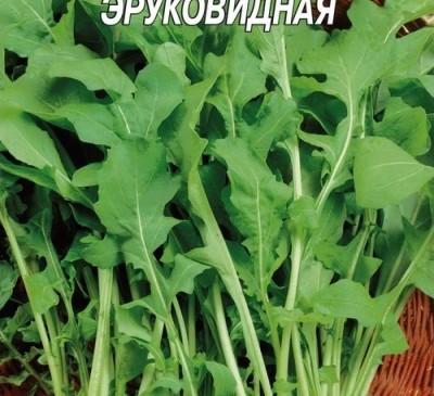 Rucola (Eruca sativa)