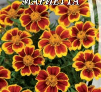 MARIGOLD MARIETTA