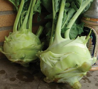 Cabbage Kohlrabi Giant