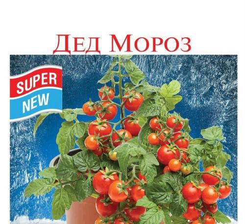 Tomato Ded Moroz seeds