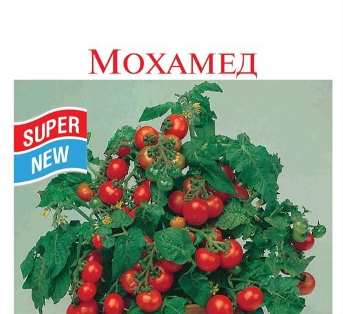 Tomato Mohamed seeds