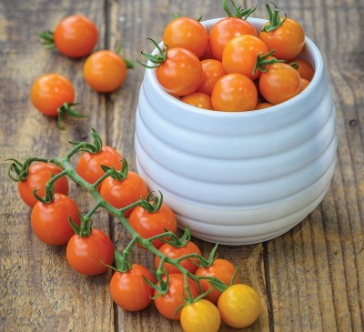 Tomato Cherry Golden