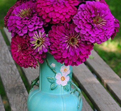 Zinnia Purple Queen