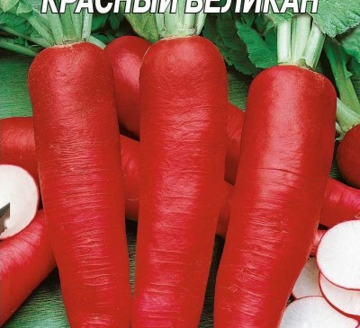 Radish Krasnyy Velikan