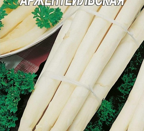 Asparagus Arzhentelskaya