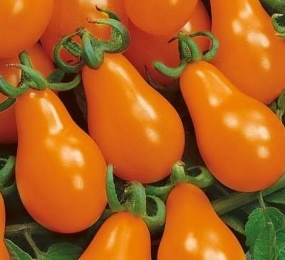 Tomato  Hrusha Krasnaya Orange Pear seeds