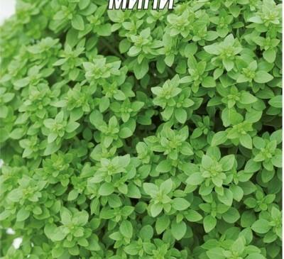 Basil Zeleniy mini