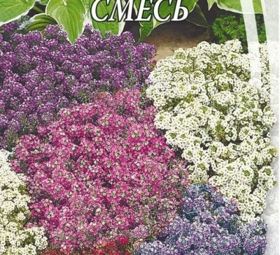 ALYSSUM MAGIC MIX