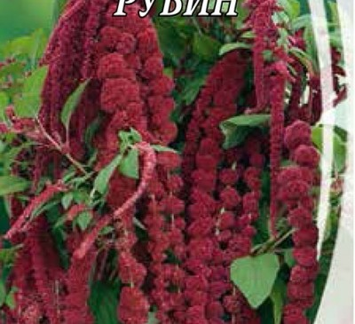 AMARANTH TAILED RUBY