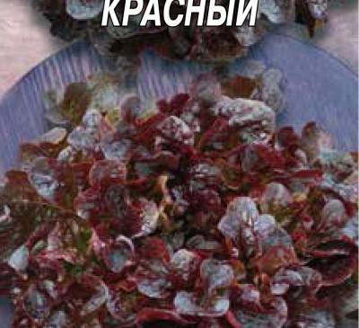 Salad Balkonnyy Krasnyy